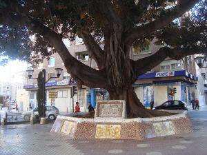 1200px-Ficus_de_la_Plaza_María_Agustina,_árbol_monumental,_Castellón_de_la_Plana